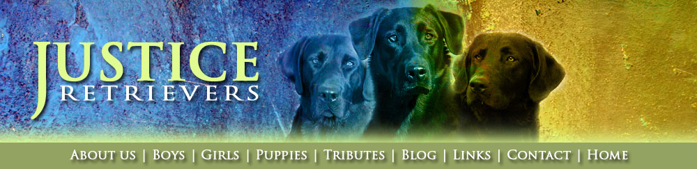 Black labs, Chocolate labs, Field labs, Field champions, Field Trials, Field Trails, Southland studs, Lab studs, Yellow Labs, Red Labs, Fox Red Labs, Brown Labs, Chocolate Labs, Hunt tests, Hunting labs, Agility labs
